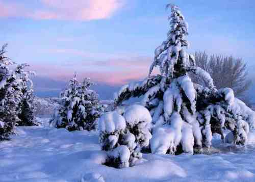 spring-at-lot-4-az-cypress