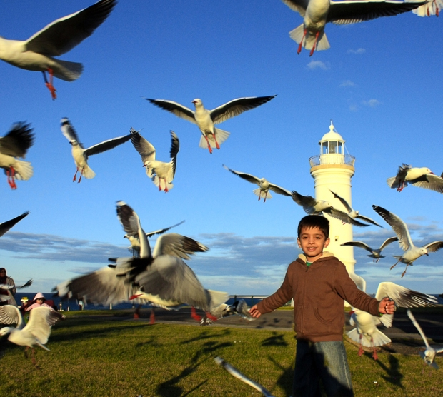 The Gull Attack